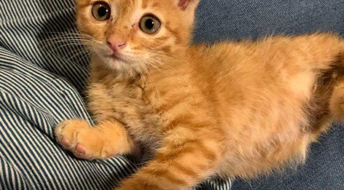 赤猫ヒロユキ、メンタル最強のやんちゃ子猫:先住猫は大混乱