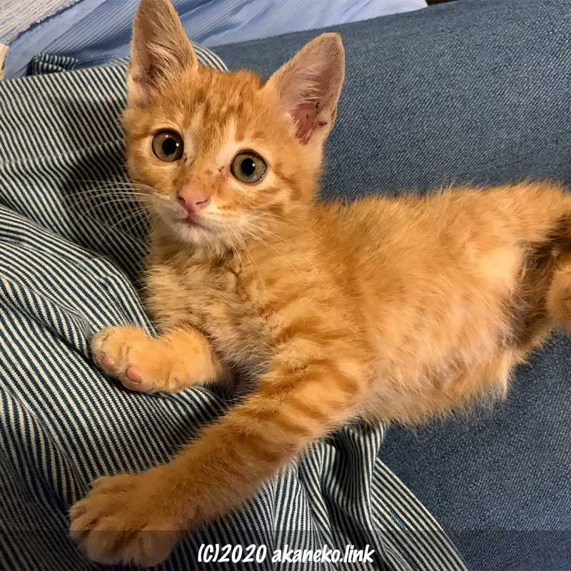 保護4日目のわんぱく子猫