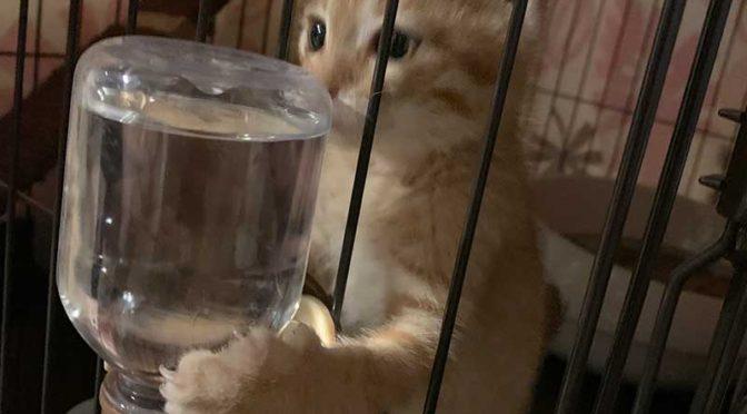 アイリスオーヤマのコンビネーションサークル1段で子猫部屋