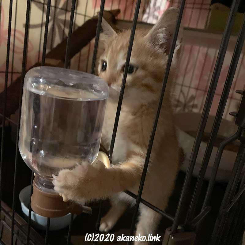 ペット用給水器と戦う子猫