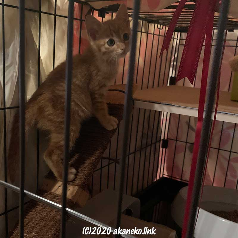 板にシュロを巻いたスロープを登る子猫