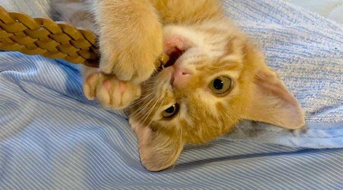 可愛い子猫は早く手放すに限るのだ:チビ猫ヒロユキ、里子に行く