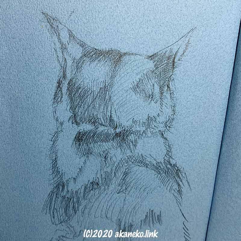 猫(みかん)の後ろ姿のスケッチ