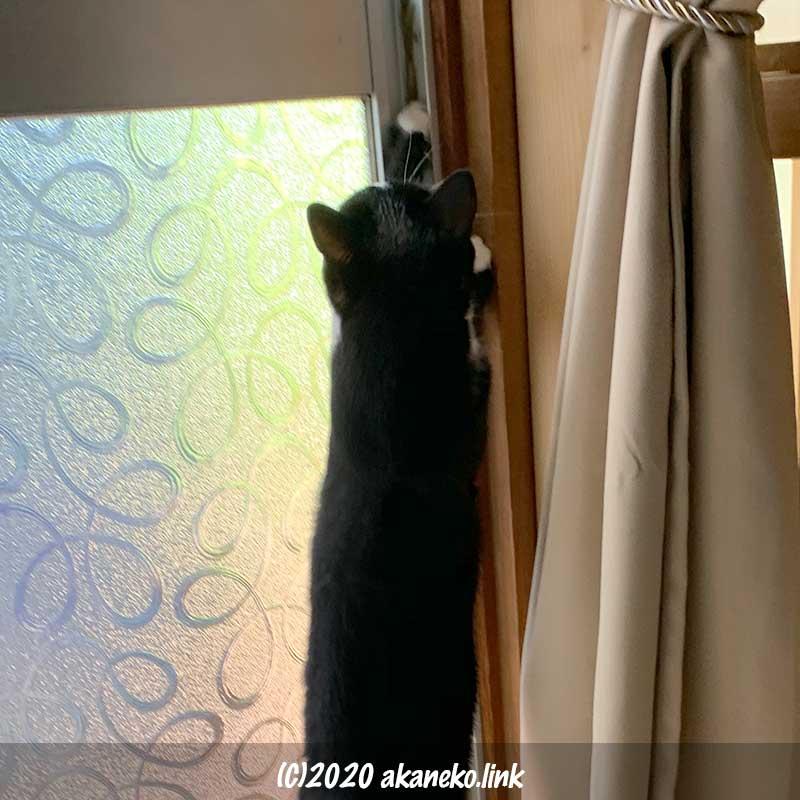 後ろ足で立ち上がりサッシを開けよう試みる猫