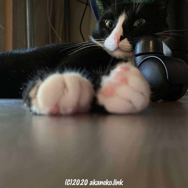 椅子のキャスターを枕に寝そべる猫