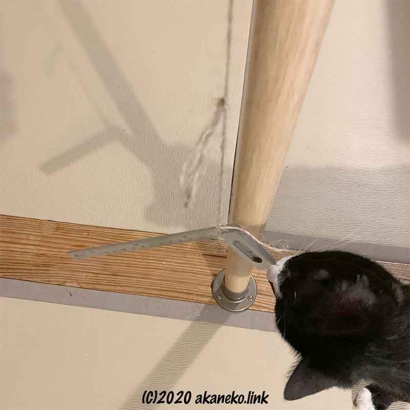 DIY作業を邪魔する猫