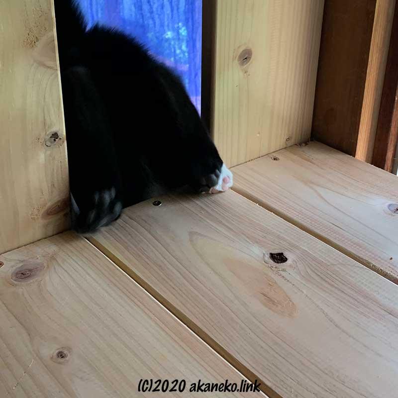 棚から落ちてしまいそうな猫のお尻