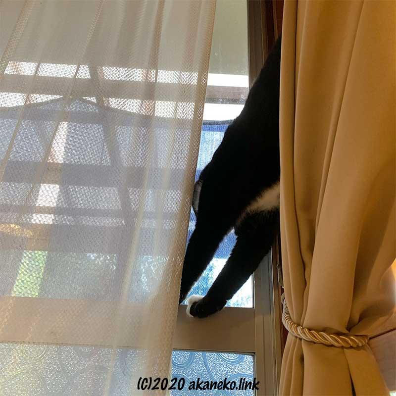 掃き出し窓に棚から手をかける猫