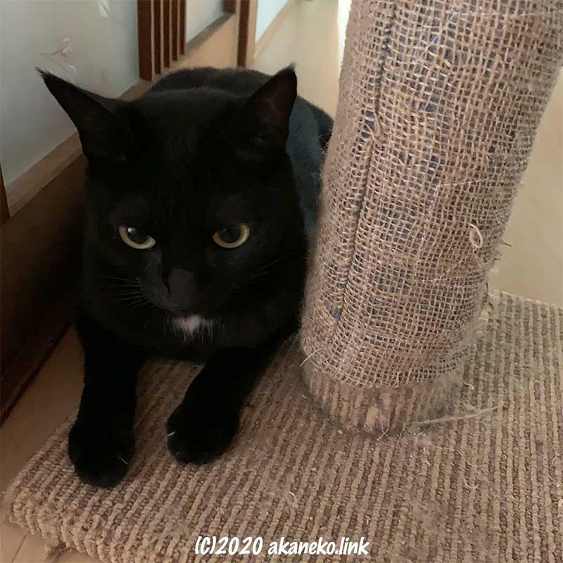麻根巻き布で補修した爪研ぎポールと黒猫