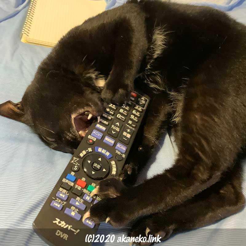 スカパーのリモコンに襲いかかる黒猫