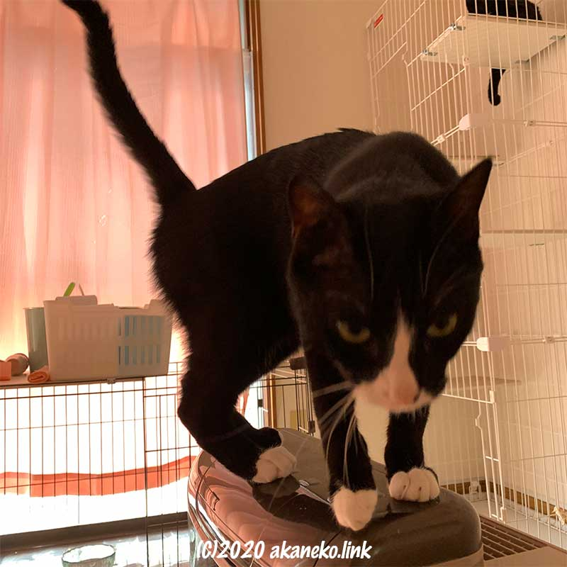 空気清浄機の上に立つ猫