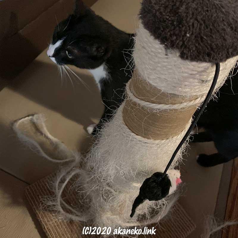 ボロボロになった猫愛用のマルカン爪研ぎタワー
