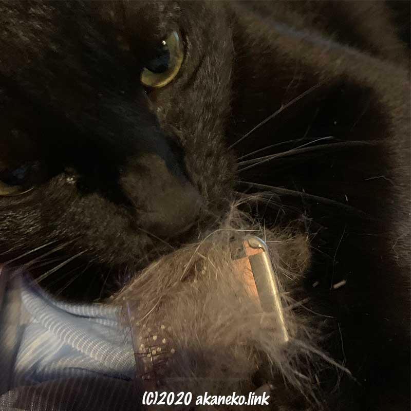スリッカーブラシにかじりつく猫