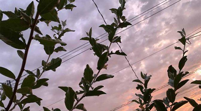 我が家の台風準備:剪定と鉢植え移動