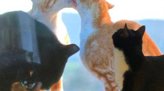 テレビの中の友達:ソックス、画面の猫に挨拶する
