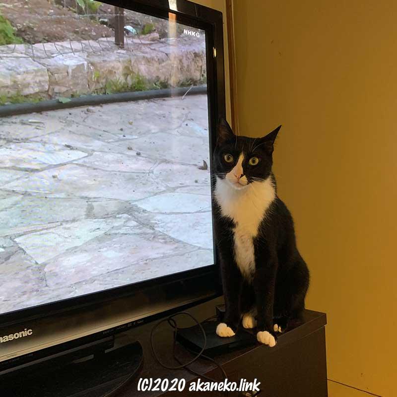 テレビ画面の横に座っている猫