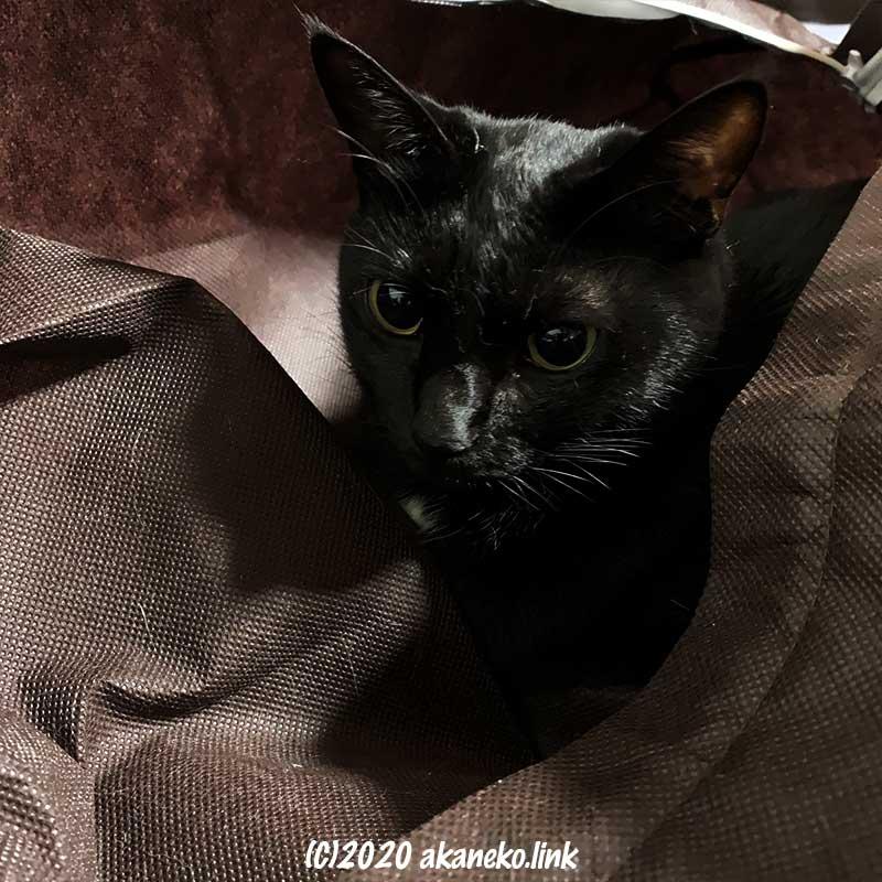ダイソーの布団袋の中の黒猫