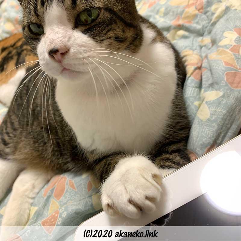 iPadに手をかけて邪魔をする猫