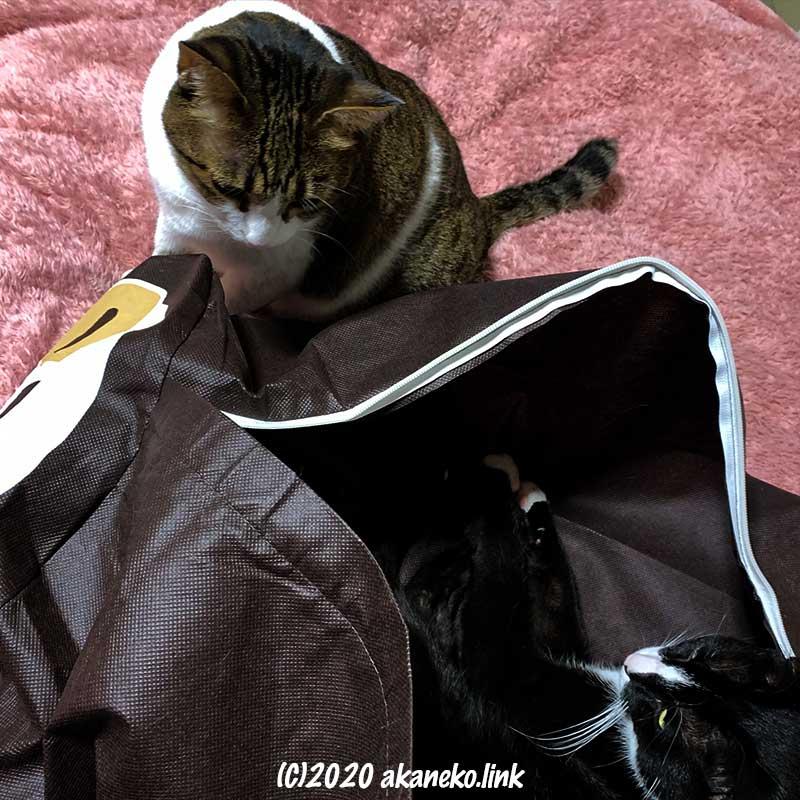 猫がダイソーのナマケモノ布団袋を取り合い