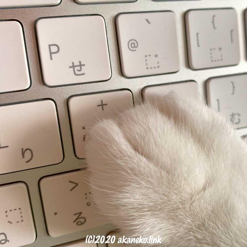 キーボードの上の猫の手