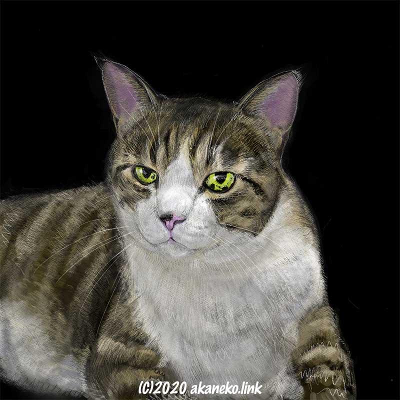 プロクリエイト(Procreate)で描いた猫の絵