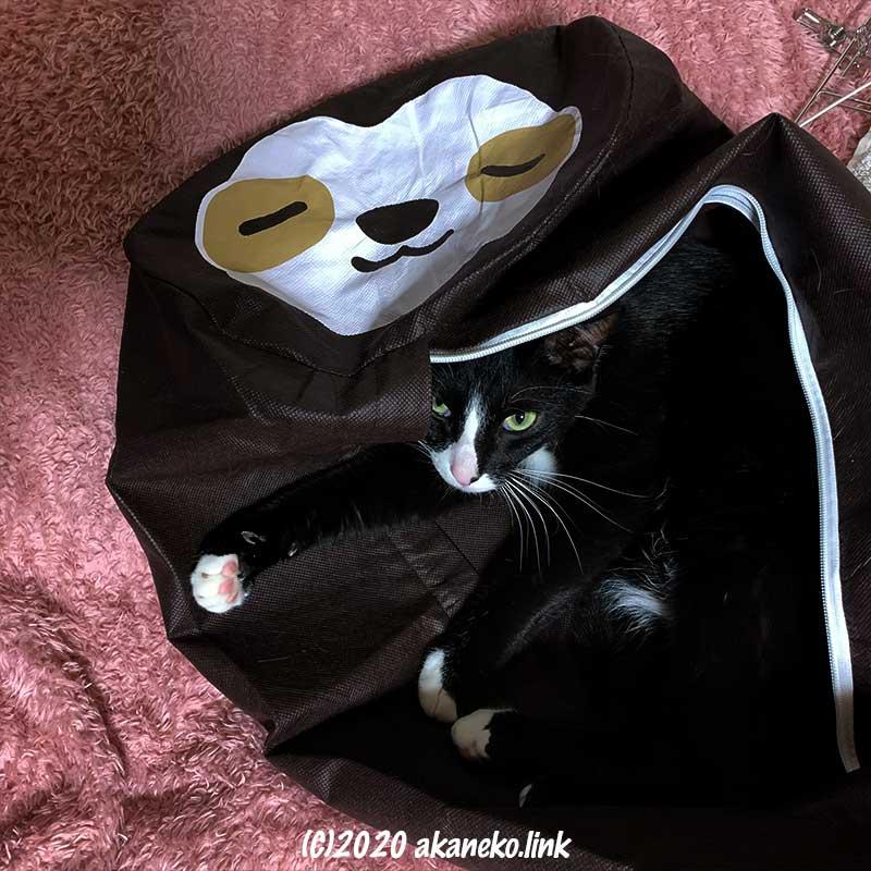 ダイソーのナマケモノ布団袋の中の猫
