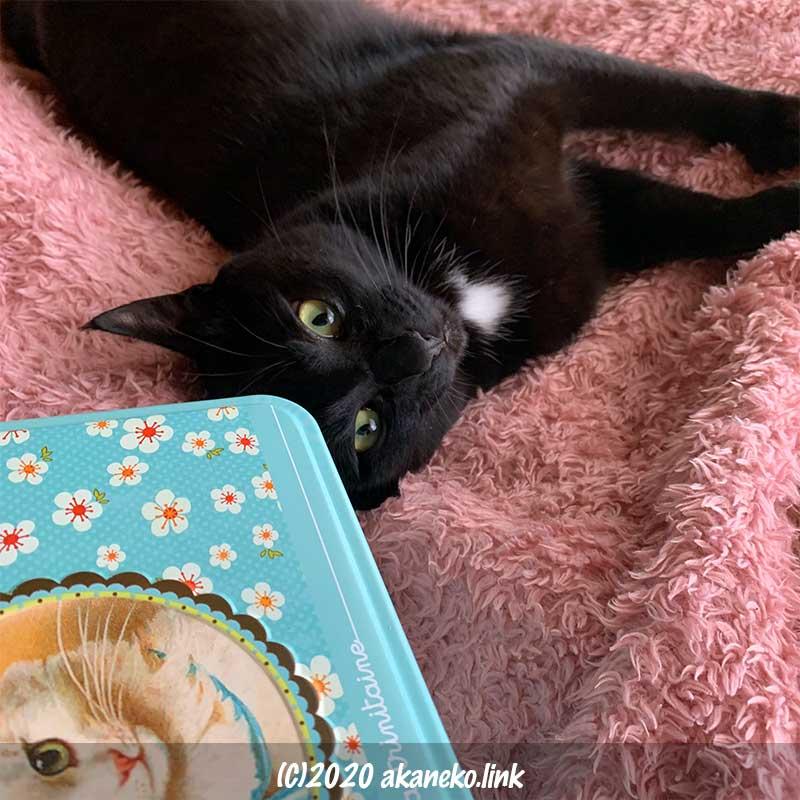 ラ・トリニテーヌの猫缶に額をつける黒猫