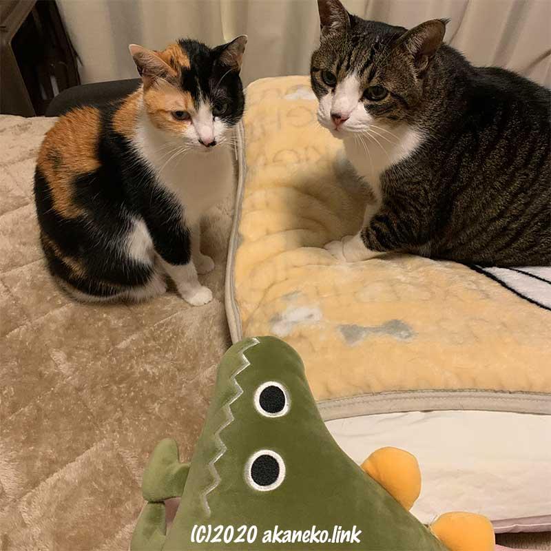 2匹の猫とダイソーの恐竜クッション