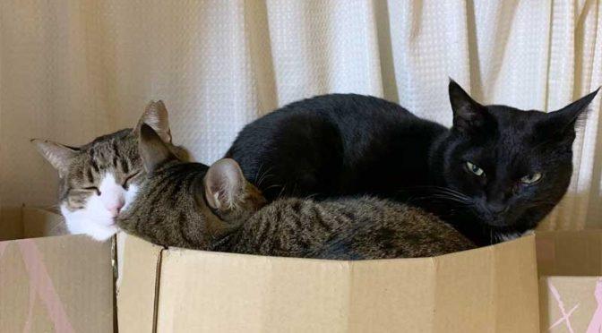 アマゾンの段ボール箱に詰まった3匹の猫
