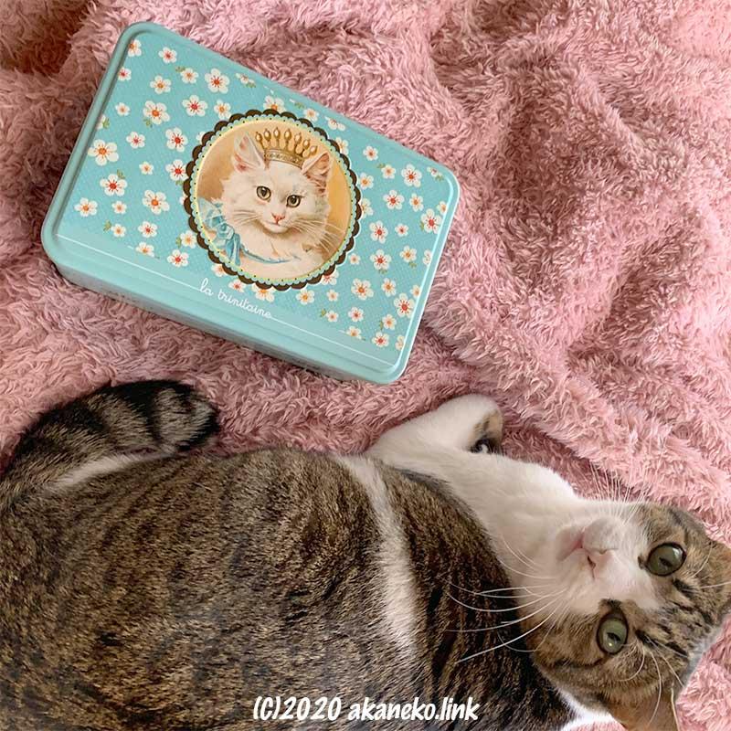 ラ・トリニテーヌの猫缶とキジ猫