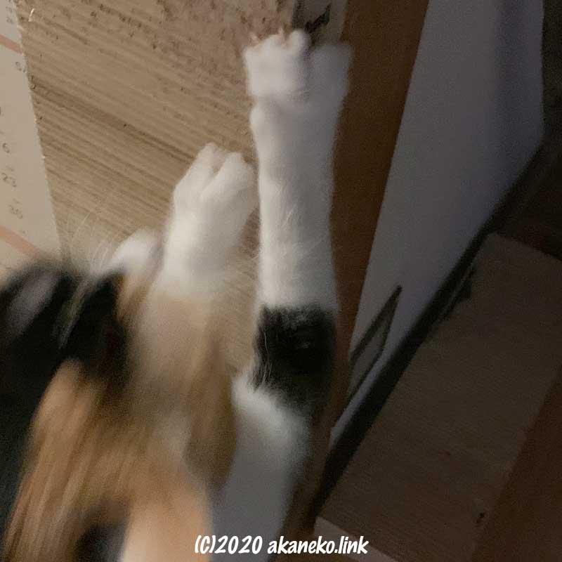 壁に取り付けた爪とぎを使う猫