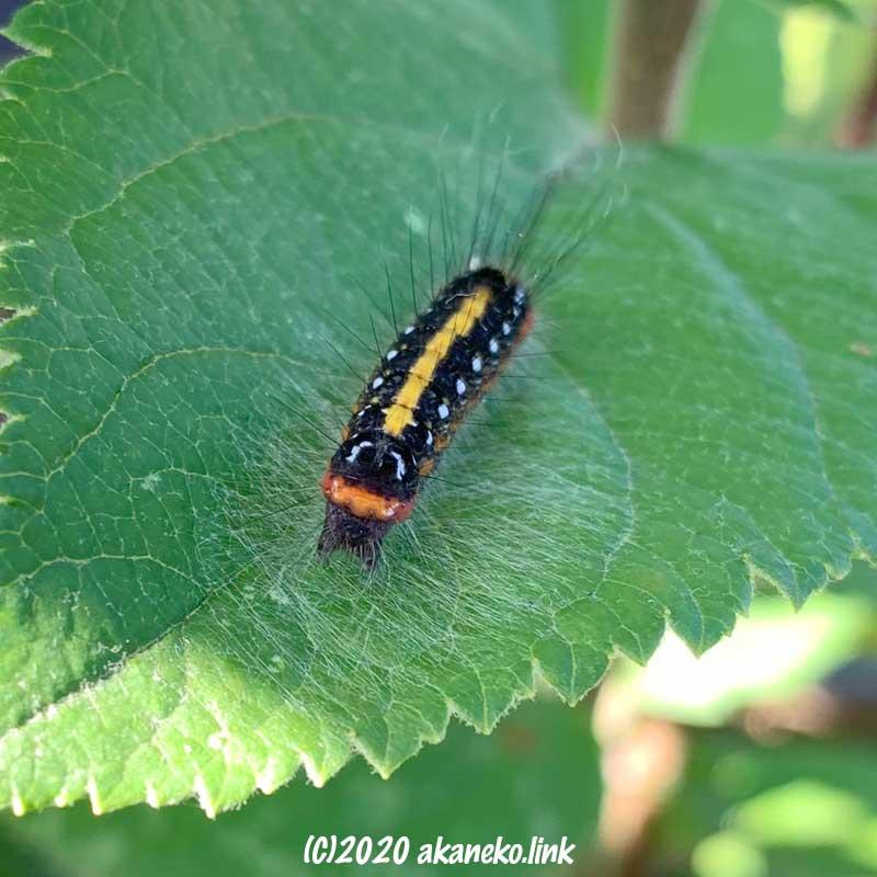 リンゴの葉の上のリンゴケンモン幼虫