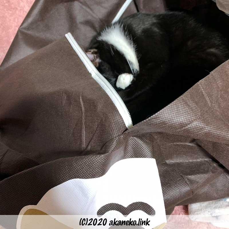 ナマケモノ布団袋の中で猫熟睡
