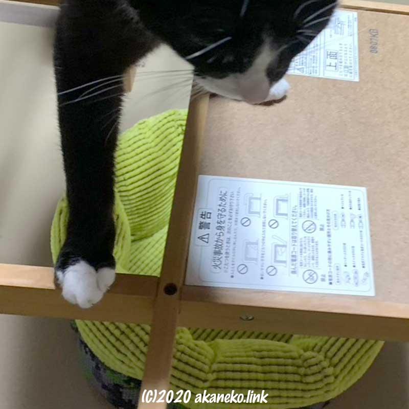 炬燵の櫓をチェックする猫
