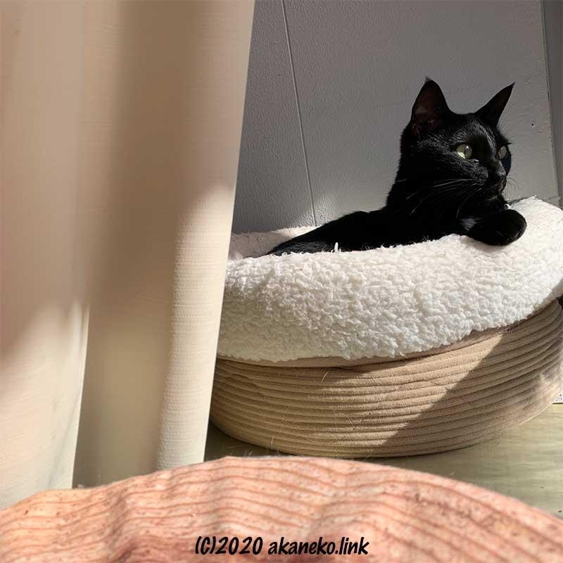 猫ベッドに寝て窓の外を眺める黒猫