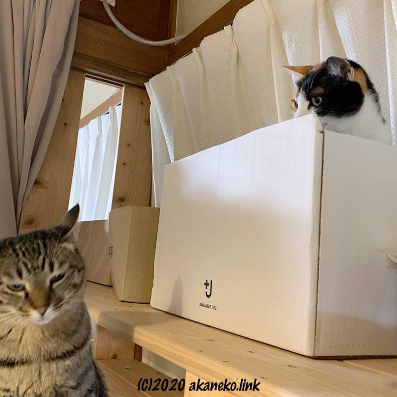 苦手な猫(みかん)から絶妙なタイミングで目を逸らす猫(茶々)