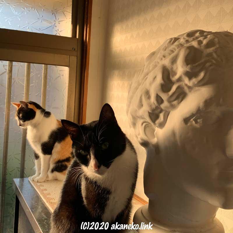 ラボルトの頭部と2匹の猫