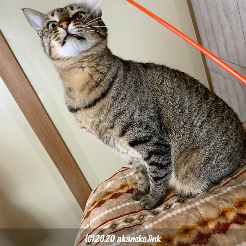 マッサージチェアの上の猫