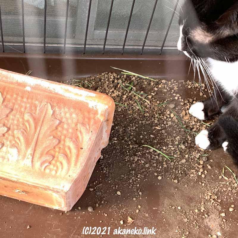 ひっくり返った植木鉢と猫