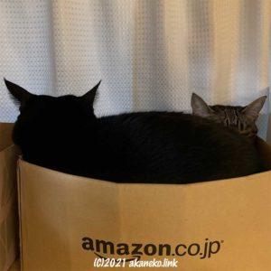 アマゾンの段ボールに詰まった黒猫とキジ猫