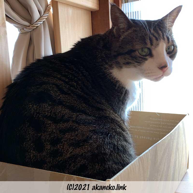 猫棚の段ボールの中の猫