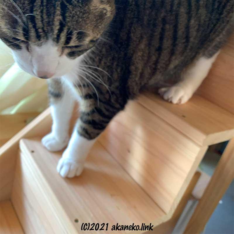 猫階段を降りる猫