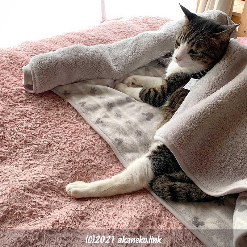 昼寝の邪魔をされた猫