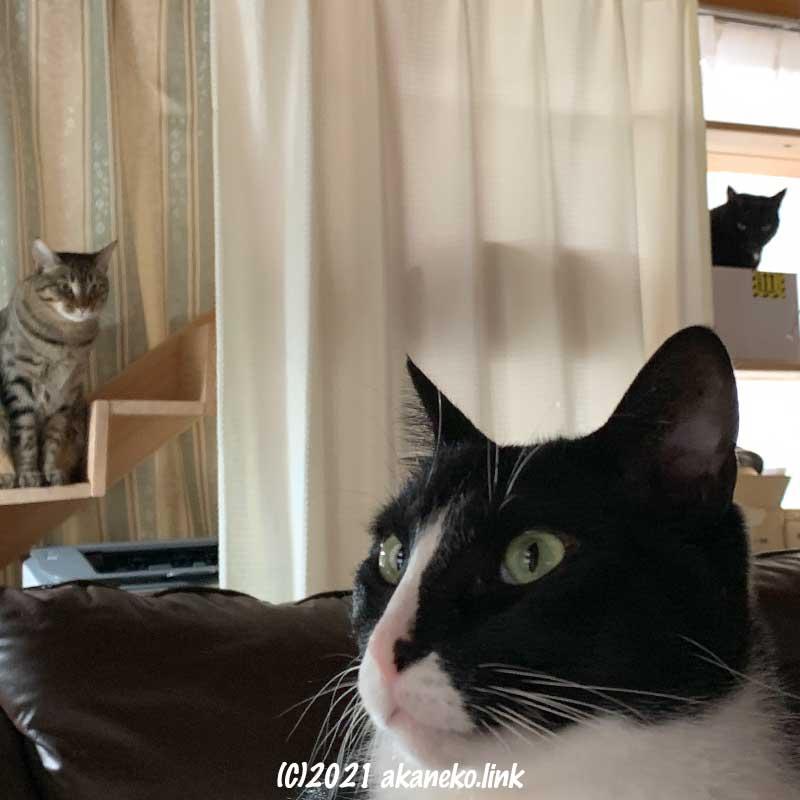 猫棚と猫階段とソファに猫1匹づつ