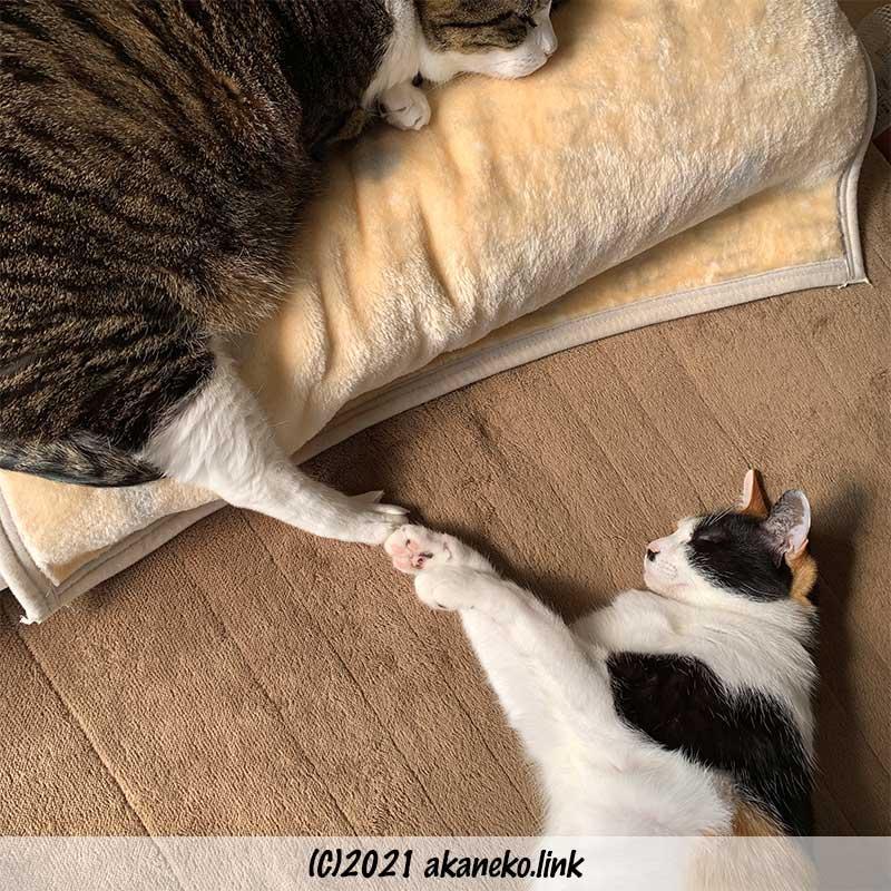 眠る我が家のA群:キジ猫エドと三毛猫みかん