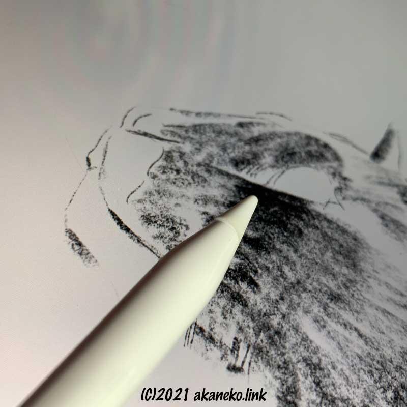 プロクリエイト の鉛筆で猫の顔を描く