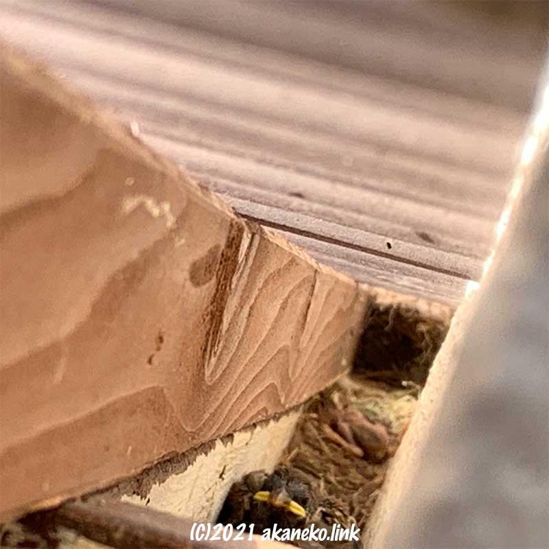 ウッドデッキの屋根下の雀の巣に雛鳥発見