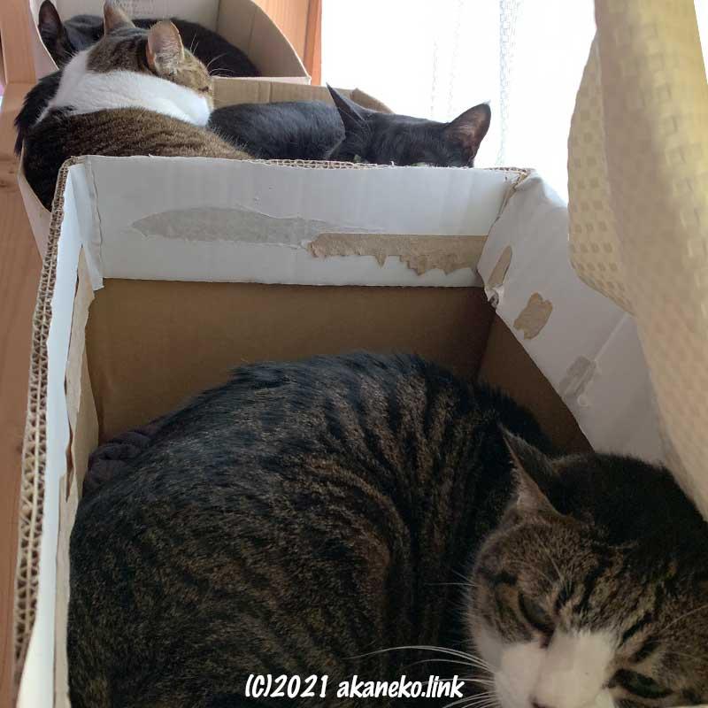 猫棚の上の段ボールで眠る猫たち