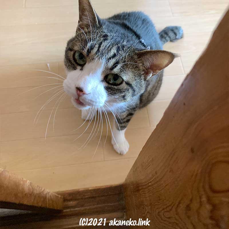 廊下から見上げる猫