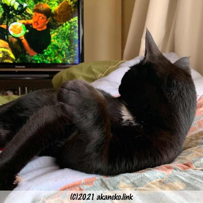 テレビ鑑賞を満喫中の黒猫